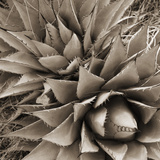 Desert Plants III Photographic Print by Bob Stefko