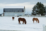 Grazing the Snow Photographic Print by Dana Styber