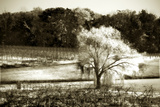 Viñedo I Lámina fotográfica por Alan Hausenflock