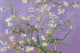 Vincent Van Gogh Almond Blossoms Lavender Art Print Poster Posters