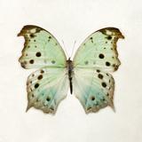 Butterfly Impression Giclee Print by Irene Suchocki