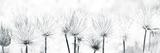 Pasque Flower Giclée-tryk af Katja Marzahn
