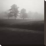 Fog Tree Study II Kunst op gespannen canvas van Jamie Cook
