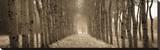The Shimmering Forest Sträckt kanvastryck av Heather Ross