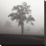 Fog Tree Study I Kunst op gespannen canvas van Jamie Cook