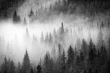 Fog Drifts Through a Coniferous and Aspen Forest Along Maroon Creek Fotografisk tryk af David Hiser