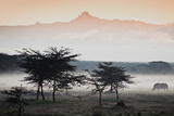 White Rhinos Appear Out of the Mist in Front of Mount Kenya 写真プリント : ロビン・ムーア