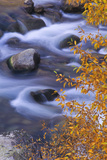 Hunter Creek, a Tributary of the Roaring Fork River, in Autumn. Photographic Print by David Hiser
