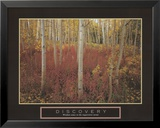 Discovery: Aspen Trees Stampe