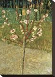 Almond Tree in Blossom, 1888 Toile tendue sur châssis par Vincent van Gogh
