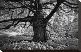 Portrait of a Tree, Study 10 Stretched Canvas Print by Marcin Stawiarz