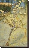 Small Pear Tree in Blossom, 1888 Toile tendue sur châssis par Vincent van Gogh