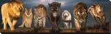 Big Cats Opspændt lærredstryk