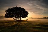 A Solitary Fallen Live Tree Under a Dramatic Sky on a Misty Morning Impressão fotográfica por Alex Saberi