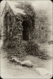 The Old Bell Tower at Warren Wilson College, Covered in Vines Reproduction photographique par Amy & Al White & Petteway