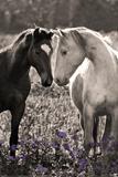 Horses I Photo by Sally Linden