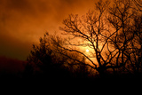 The Setting Sun Seen Through Heavy Cloud Cover and Silhouetted Tree Branches Reproduction photographique par Amy & Al White & Petteway