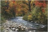 Ruisseau sylvestre Affiches