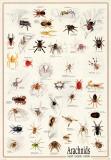 Edderkopper Plakater