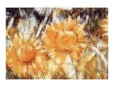 Sonnenblumen Poster von Christian Rohlfs