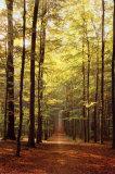 森の小道 ポスター