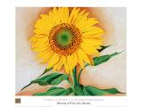 Sonnenblume Poster von Georgia O'Keeffe