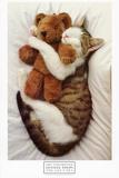 Cat's Pet Prints