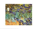 Irises, Saint-Remy, c.1889 Poster by Vincent van Gogh