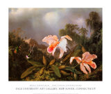 Jungle Orchids and Hummingbirds Posters af Martin Johnson Heade
