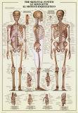 Skelettaufbau Kunstdrucke