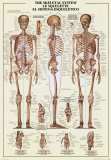 Il sistema scheletrico Stampe