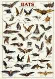 Morcegos Pôsters