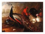 Paon et faisan Affiches par Marmaduke Cradock
