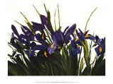 Iris sauvage Affiche par Sharon Mack
