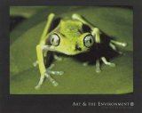 Maki Frog Poster por Konrad Wothe