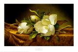 Magnolias on Gold Velvet Cloth Posters af Martin Johnson Heade