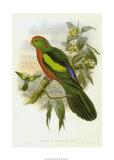 Gould Parrots II Impressão giclée por John Gould