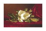 Die Magnolienblüte Poster von Martin Johnson Heade