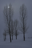 A Snowy Landscape Near Steamboat Springs Photographic Print by Raul Touzon