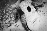 Snow Covers the Remains of An Acoustic Guitar Reproduction photographique par Amy & Al White & Petteway