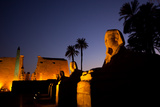 The Avenue of Sphinxes and Luxor Temple Illuminated at Night Fotografisk tryk af Alex Saberi