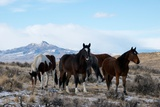 Wild Horses in the McCullough Peaks Herd Management Area Photographic Print by Bob Smith