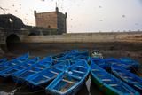 Birds Fly Over the Traditional Blue Boats of Essaouira Harbor Photographic Print by Cristina Mittermeier