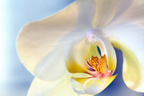 Abstract Close Up of a White Moth Or Phalaenopsis Orchid Flower Fotoprint van Vickie Lewis