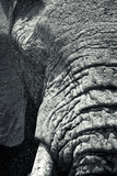 Water Sprays in a Close Up of An African Elephant's Eye and Trunk Photographic Print by Robin Moore