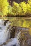 Cottonwood Trees Reflect on Havasu Creek As It Plunges Into Falls Fotografisk tryk af Derek Von Briesen