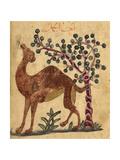 A Camel Passing a Tree Impressão giclée por Aristotle ibn Bakhtishu