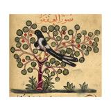 Magpie Giclée-tryk af Aristotle ibn Bakhtishu