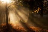 Morning Glory Fotografisk tryk af Craig Roberts