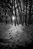 Snow Trees Fotografisk tryk af Rory Garforth